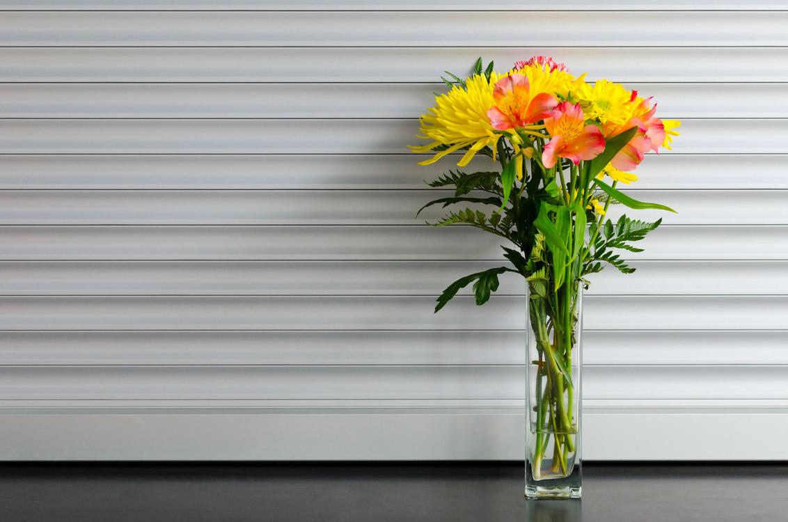 Plant,Flower,Spring