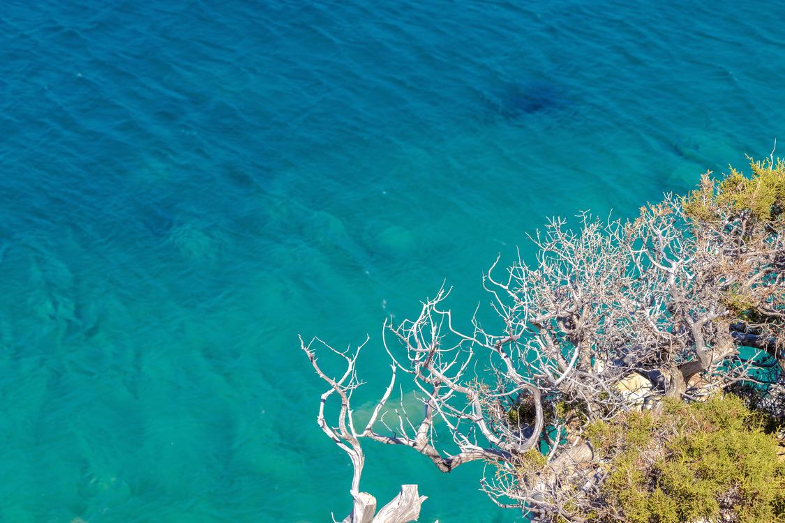 Marine Biology,Sea,Underwater