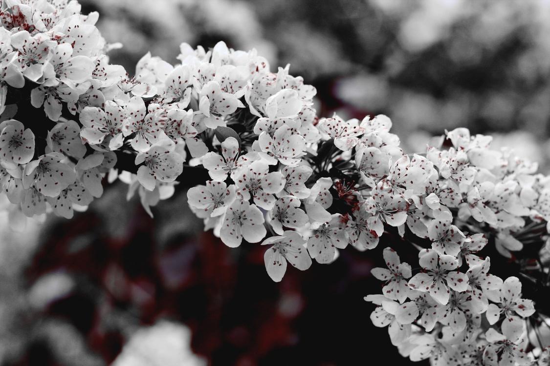 Subshrub,Plant,Flower
