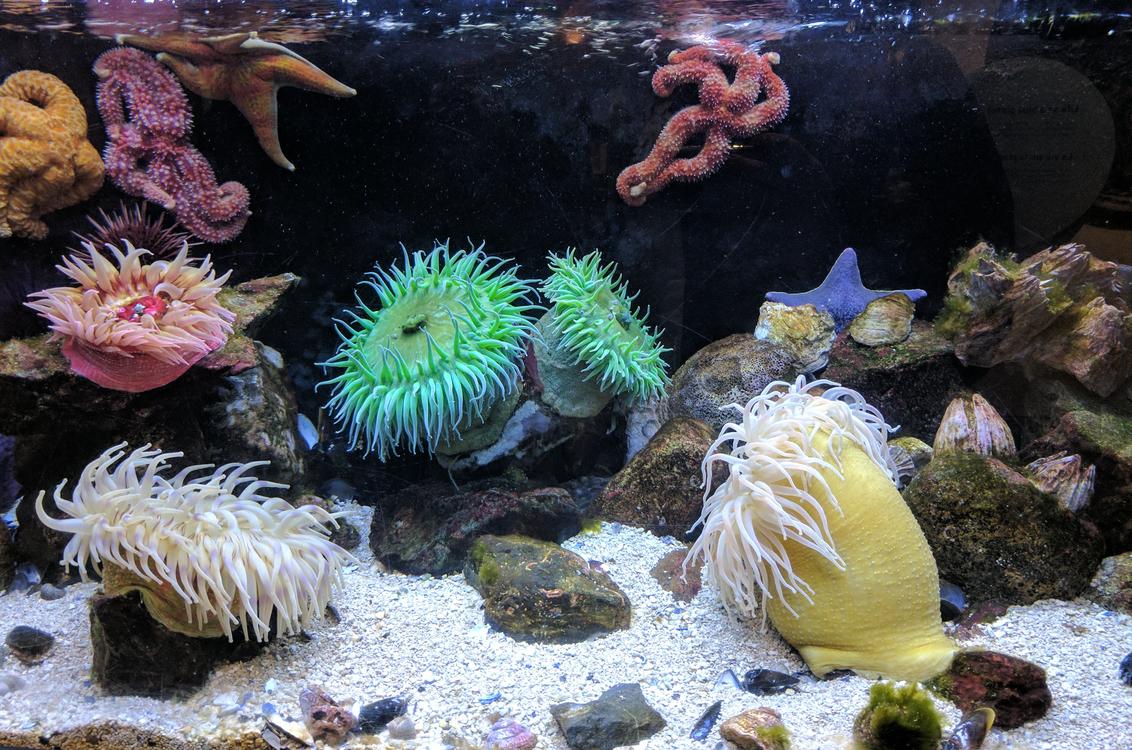 Marine Invertebrates,Marine Biology,Sea Anemone