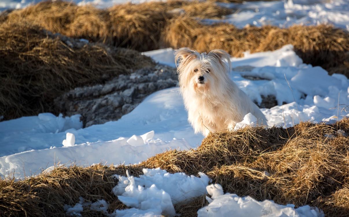 Winter,Sky,Arctic