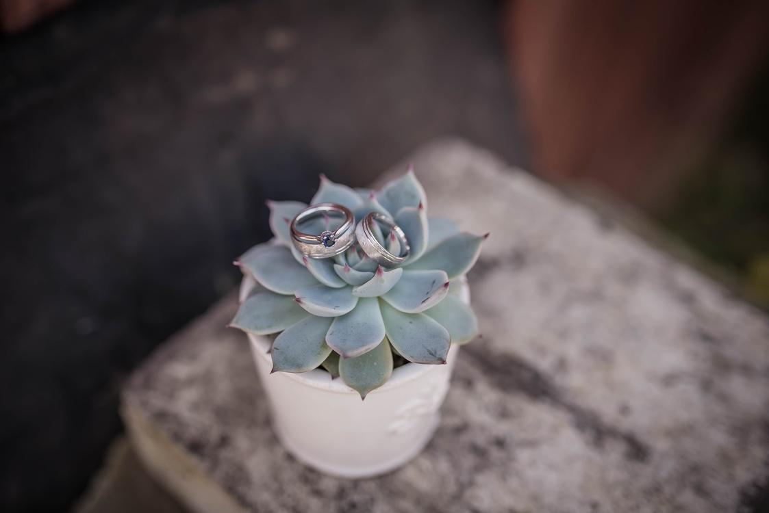 Flora,Petal,Plant