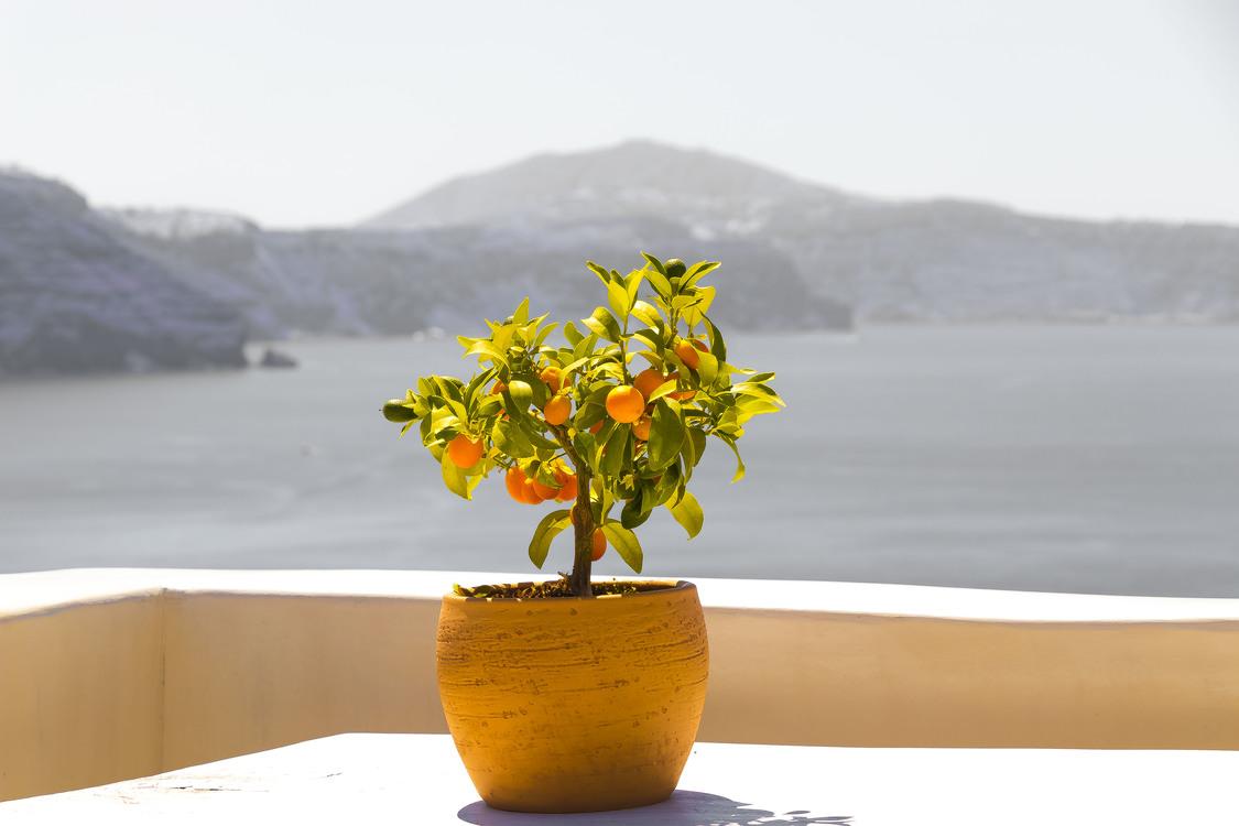 Plant,Flora,Flowerpot