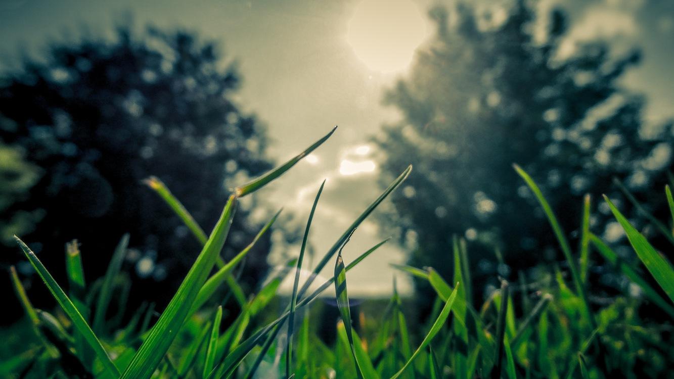 Atmosphere,Phenomenon,Spring