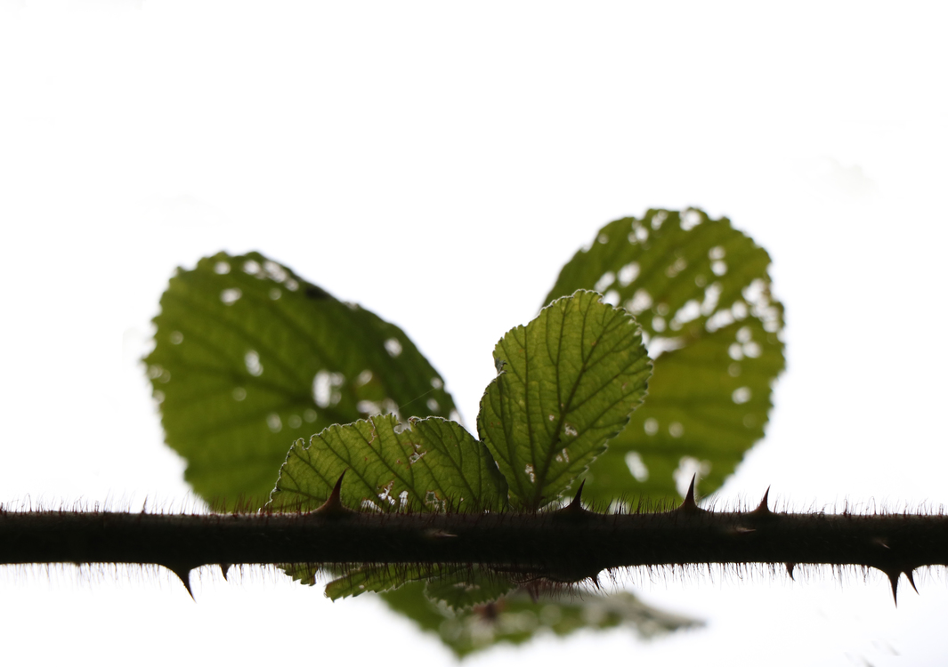 Water,Plant,Leaf
