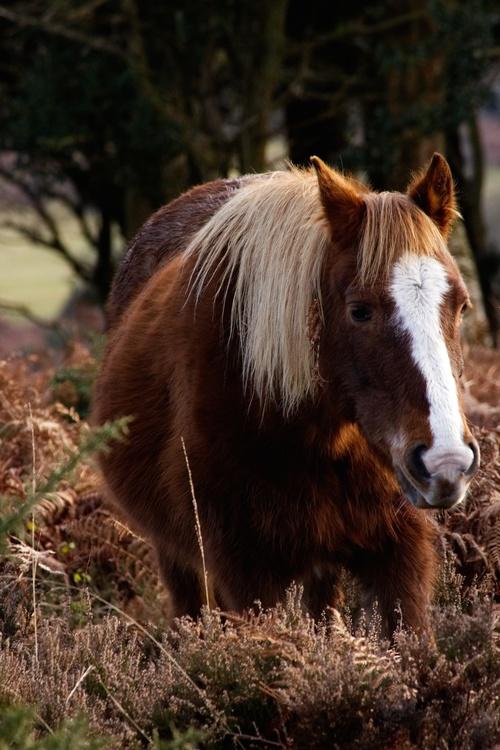 Mare,Horse,Grass