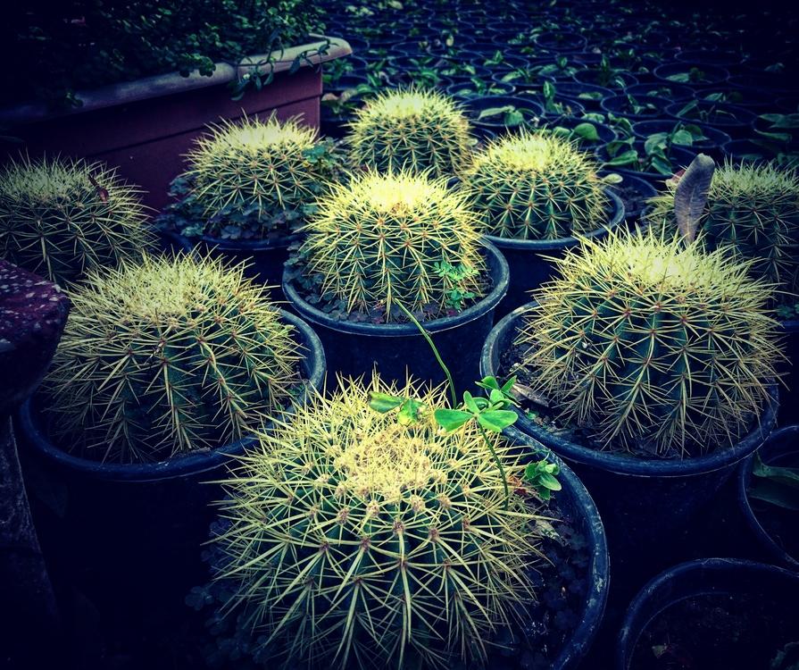 Biome,Plant,Houseplant