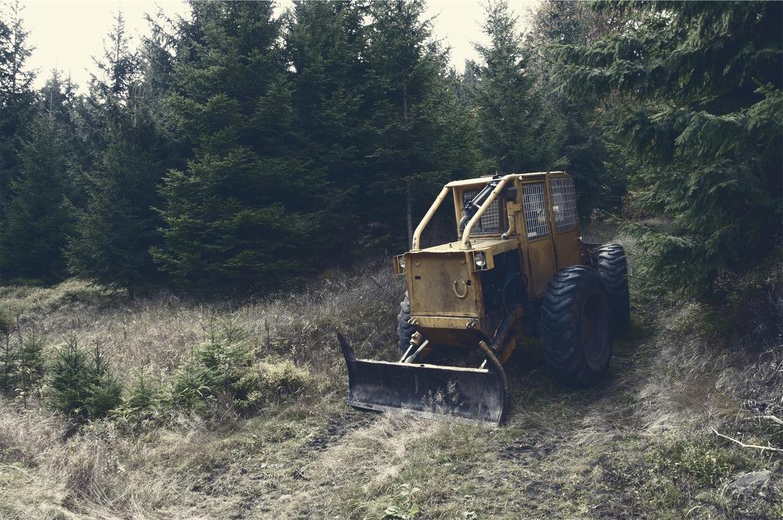 Plant,Construction Equipment,Soil