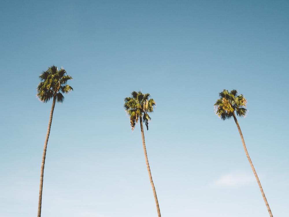 Plant,Sky,Arecales
