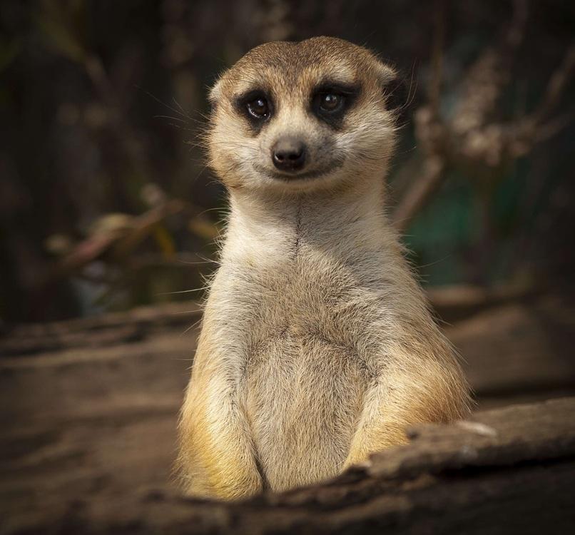 Wildlife,Fur,Whiskers