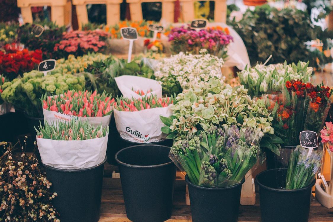 City,Plant,Flora