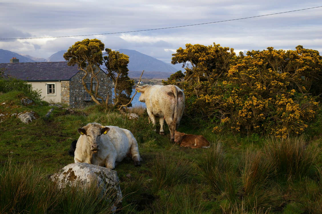 Mountain,Wildlife,Highland