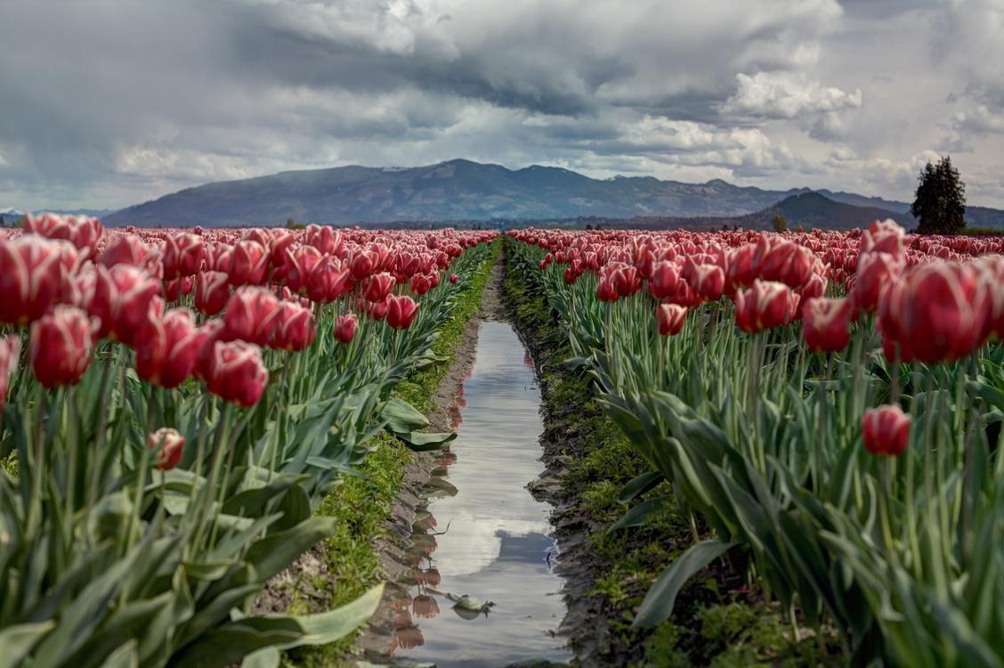 Plant,Flower,Field