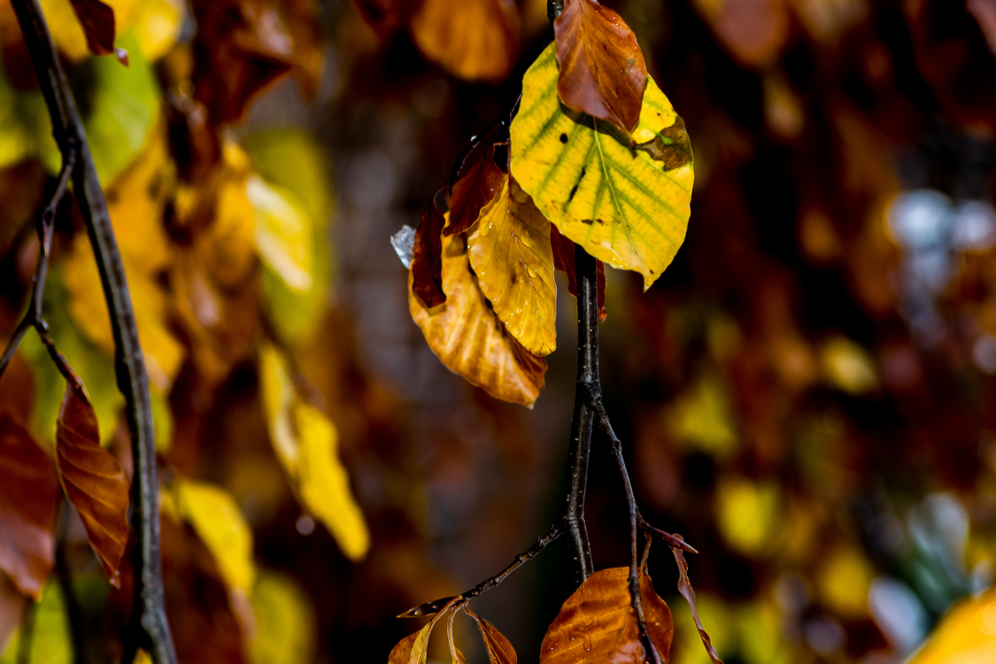 Tree,Plant,Flora