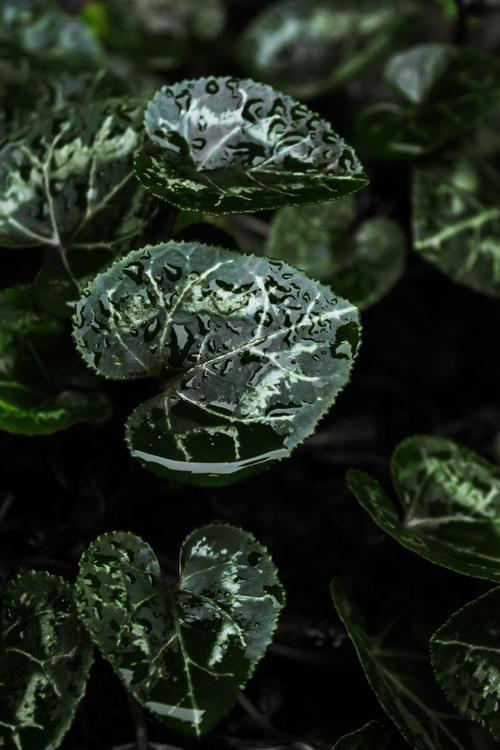 Spring Greens,Plant,Leaf