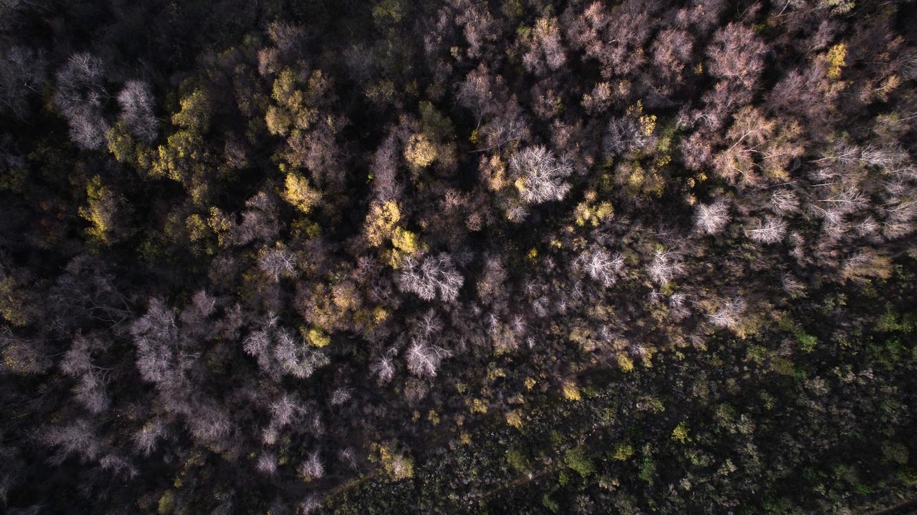 Plant,Tree,Sky