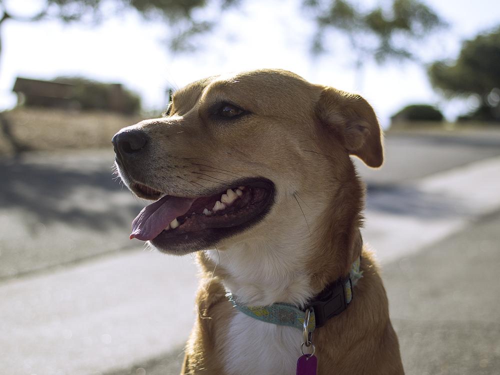 Street Dog,Companion Dog,Whiskers