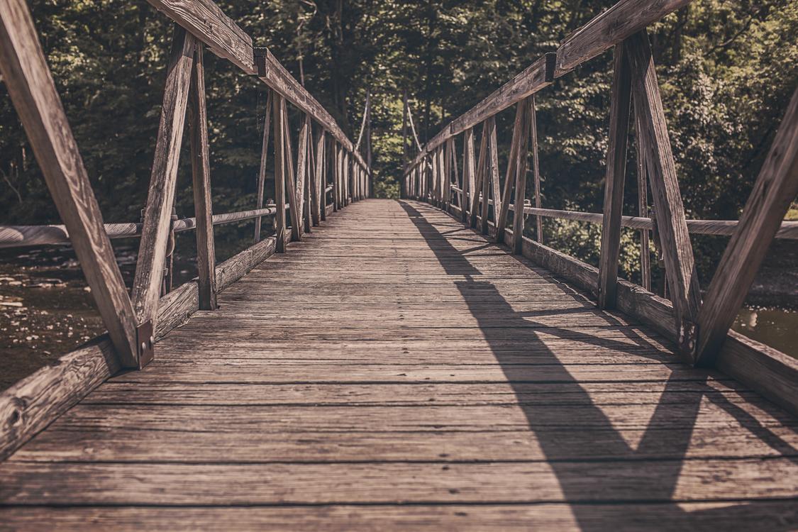 Bridge,Tree,Boardwalk
