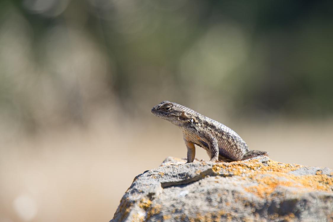 Reptile,Organism,Wildlife