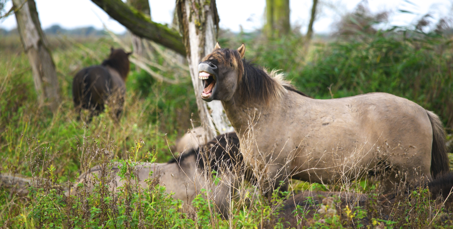 Wildlife,Horse Like Mammal,Tree