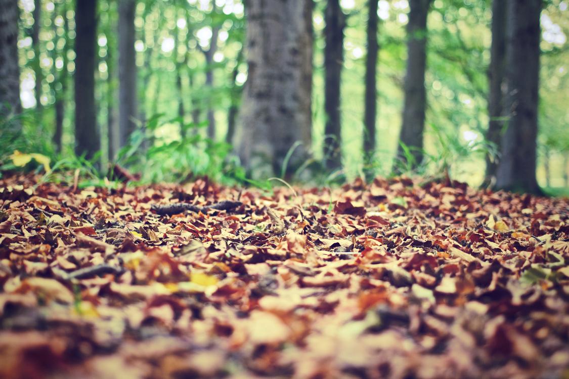 Soil,Leaf,Woodland