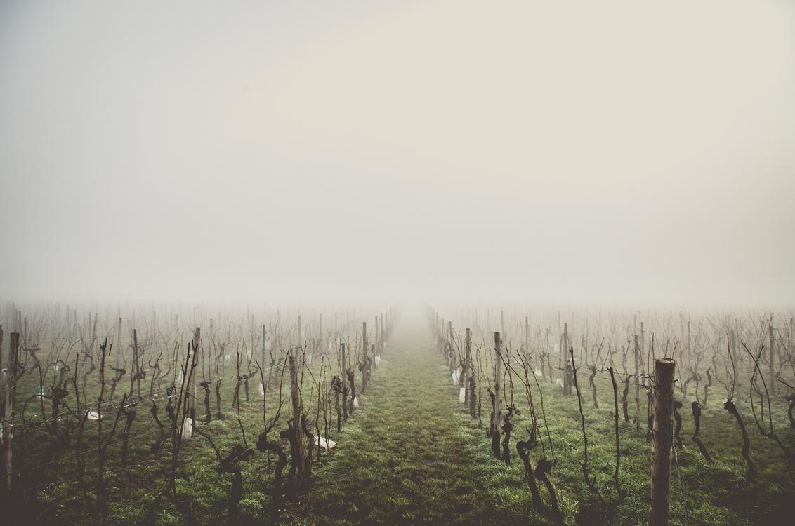 Atmosphere,Grass,Prairie
