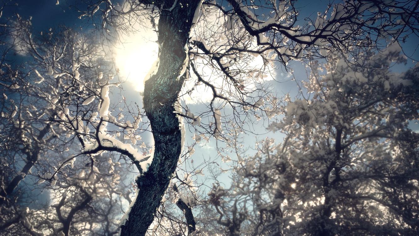 Atmosphere,Twig,Winter