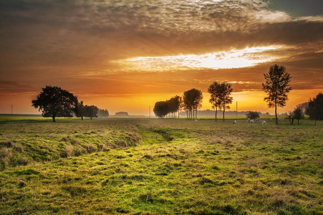 Atmosphere,Meadow,Prairie