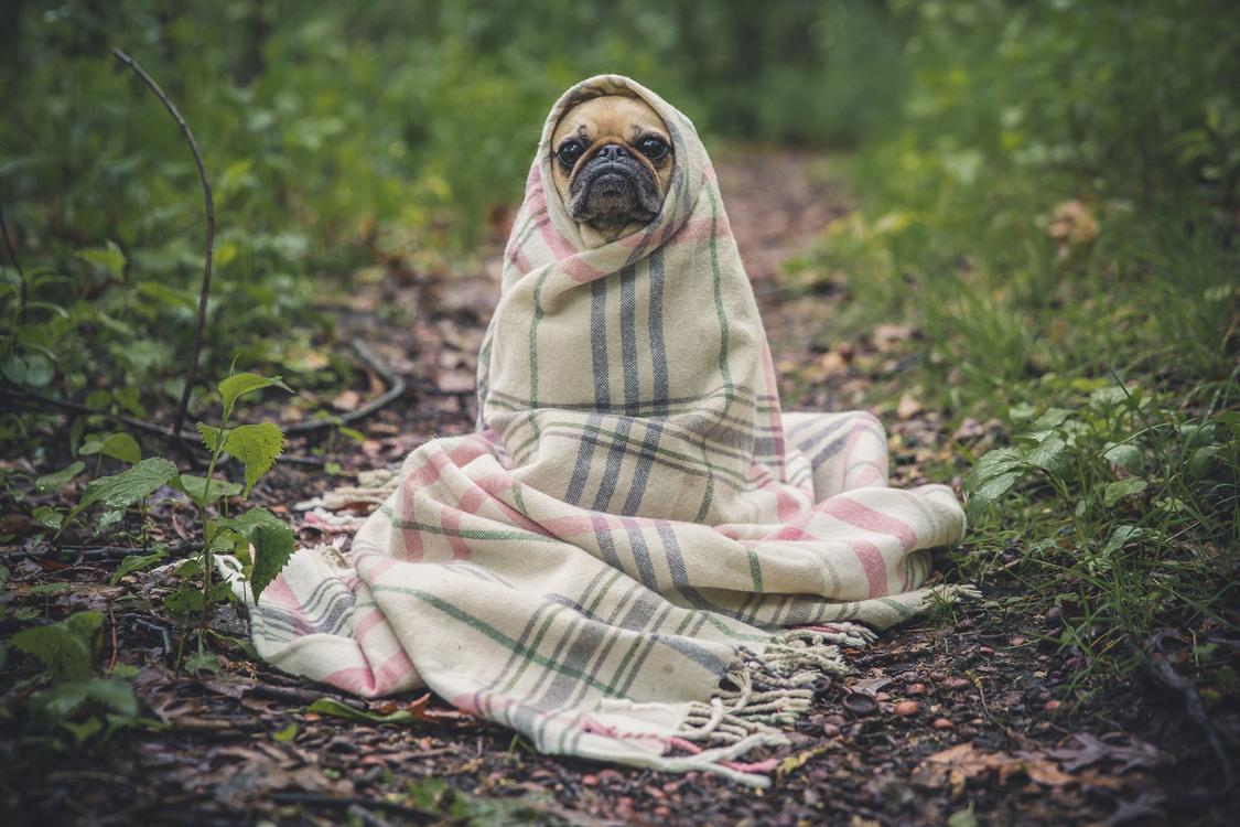Photo Blanket Comfort Object Bed Hammock