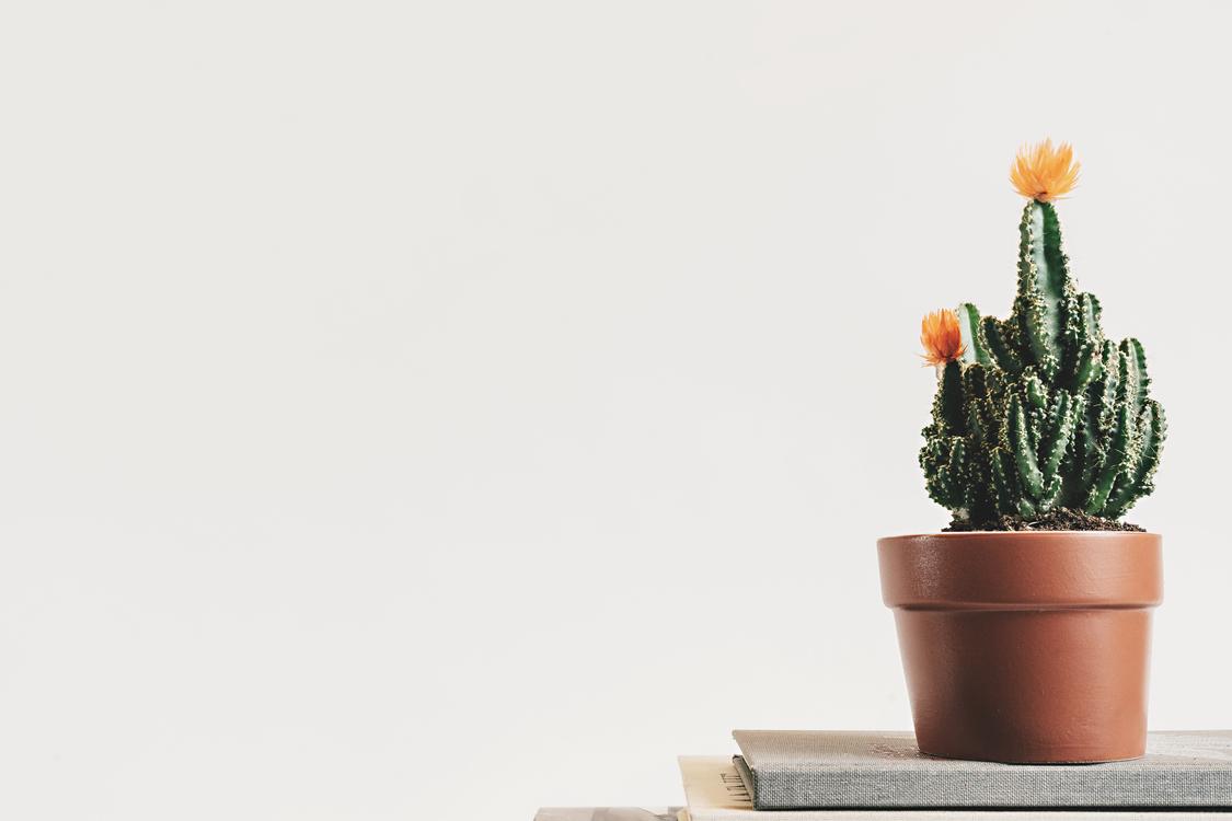 Plant,Houseplant,Caryophyllales