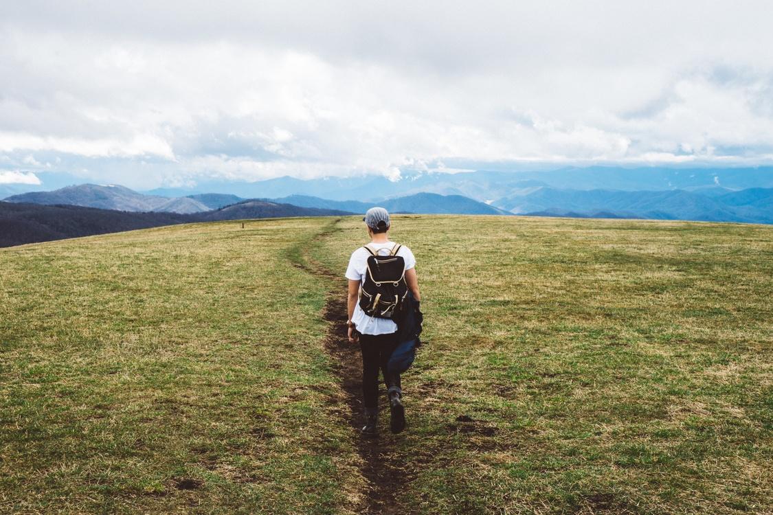 Walking,Meadow,Wilderness