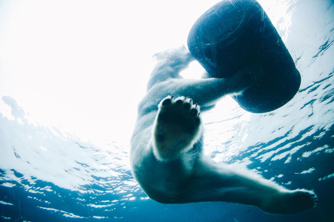 Underwater,Swimmer,Freediving