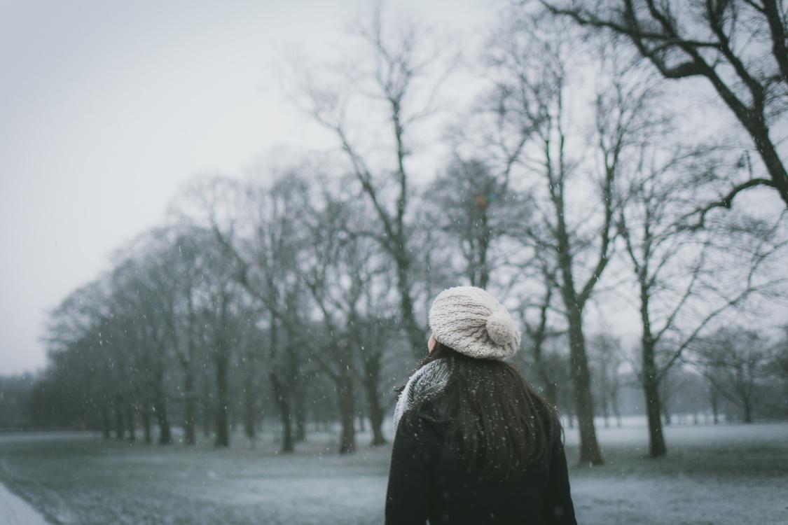 Plant,Mist,Winter