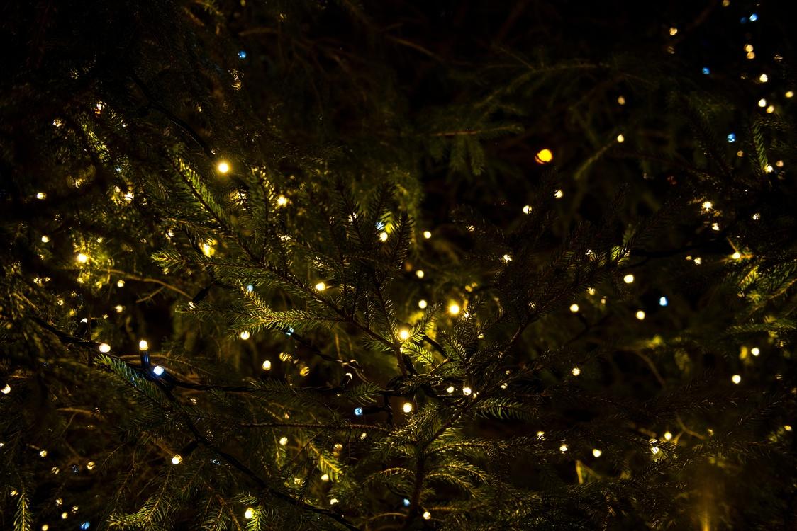 Fir,Evergreen,Christmas Decoration