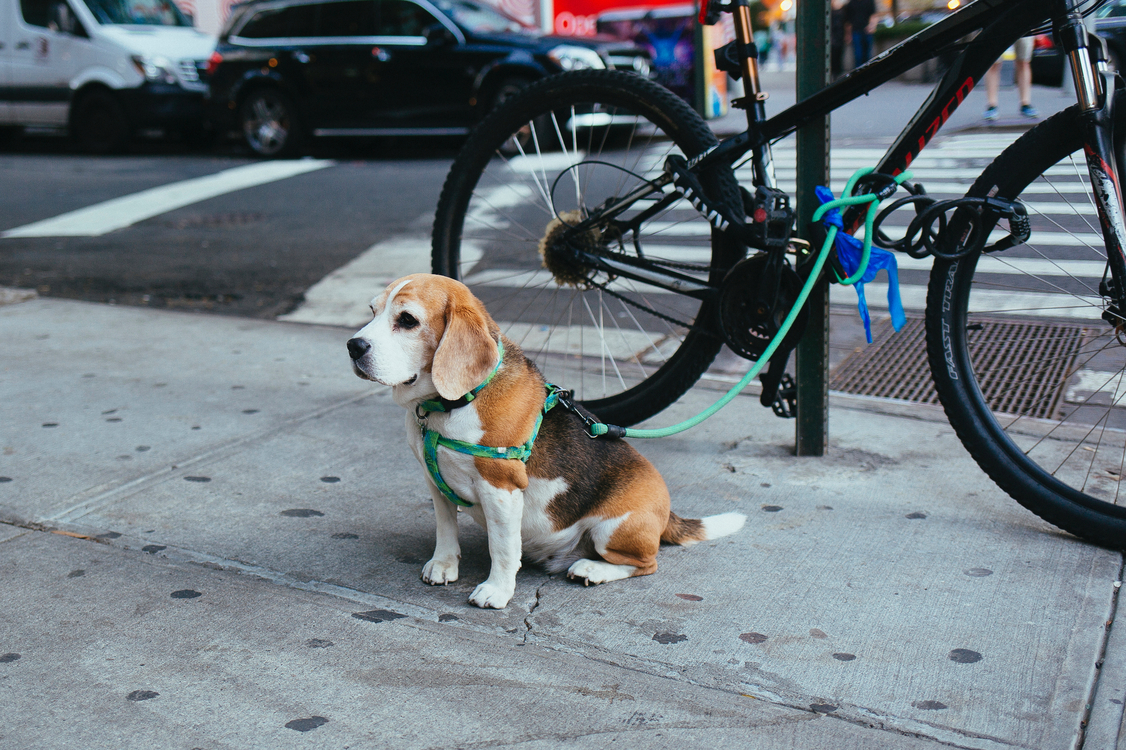 Bicycle Accessory,Snout,Hound