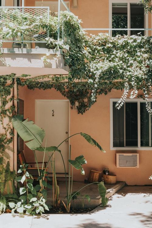 Plant,Flower,Yard