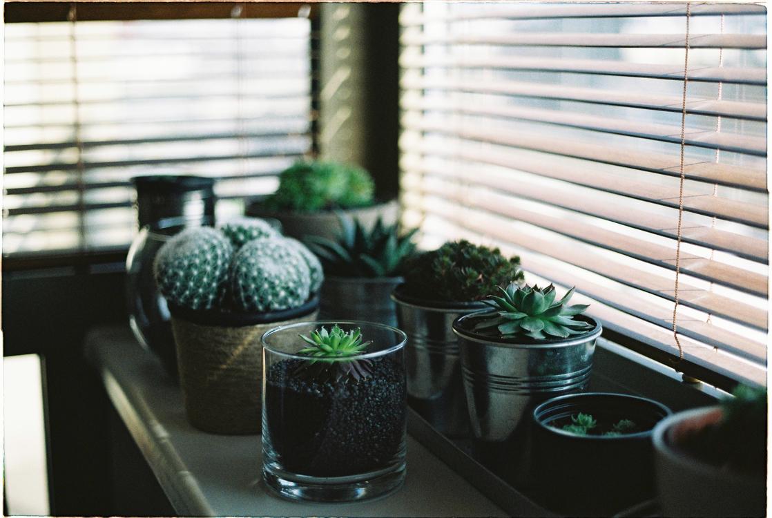 Plant,Herb,Flowerpot