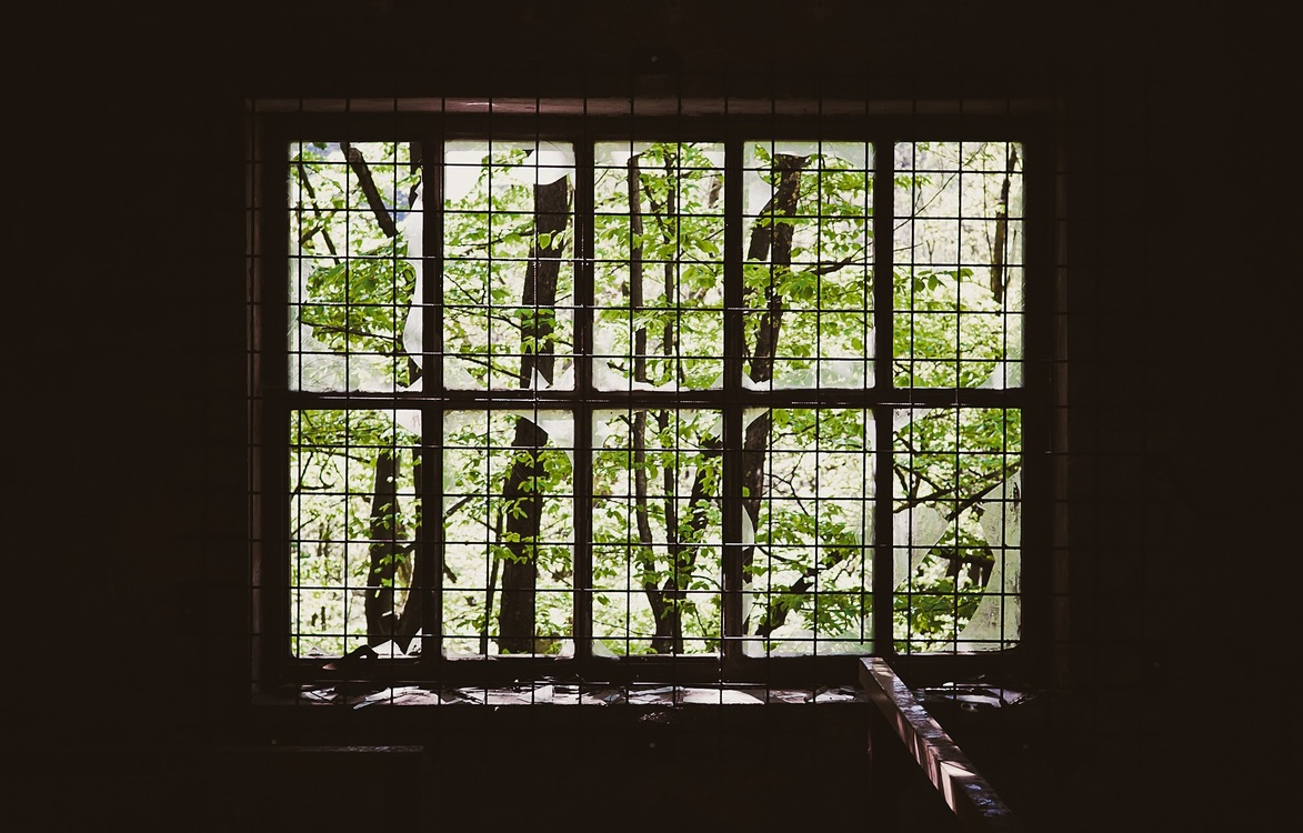House,Tree,Sunlight