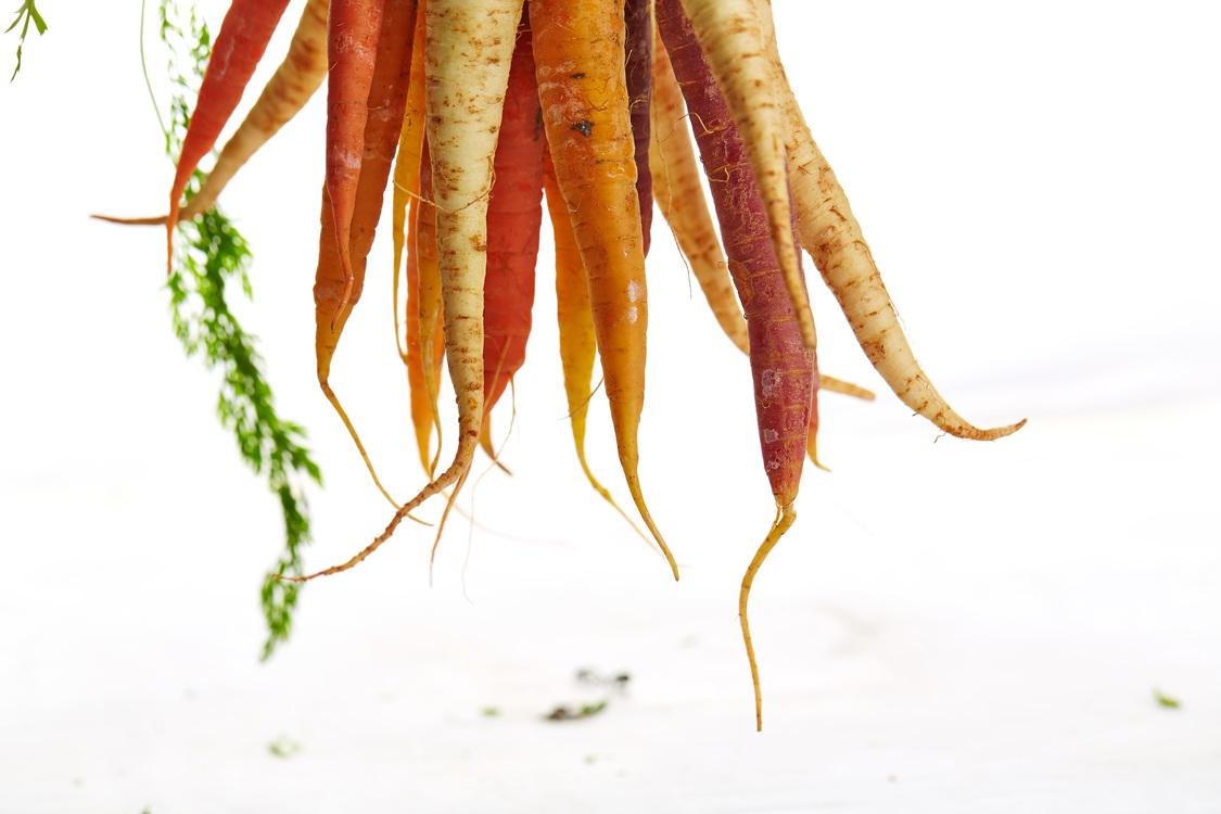 Plant Stem,Carrot,Food