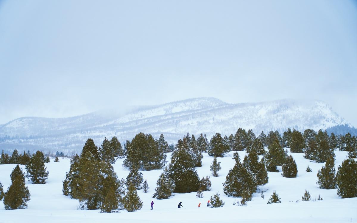 Massif,Mount Scenery,Conifer