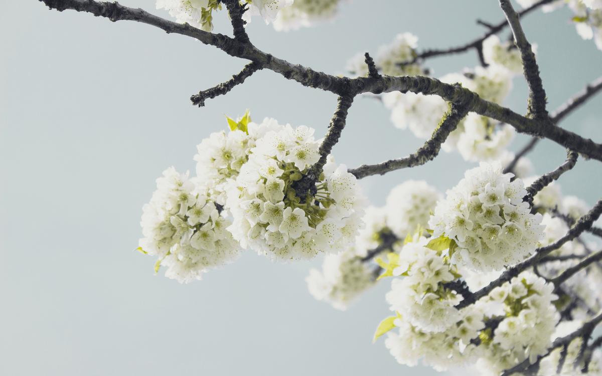 Plant,Flower,Blossom
