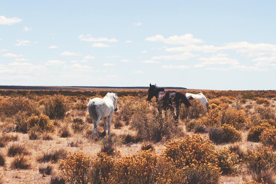 Livestock,Shrubland,Prairie