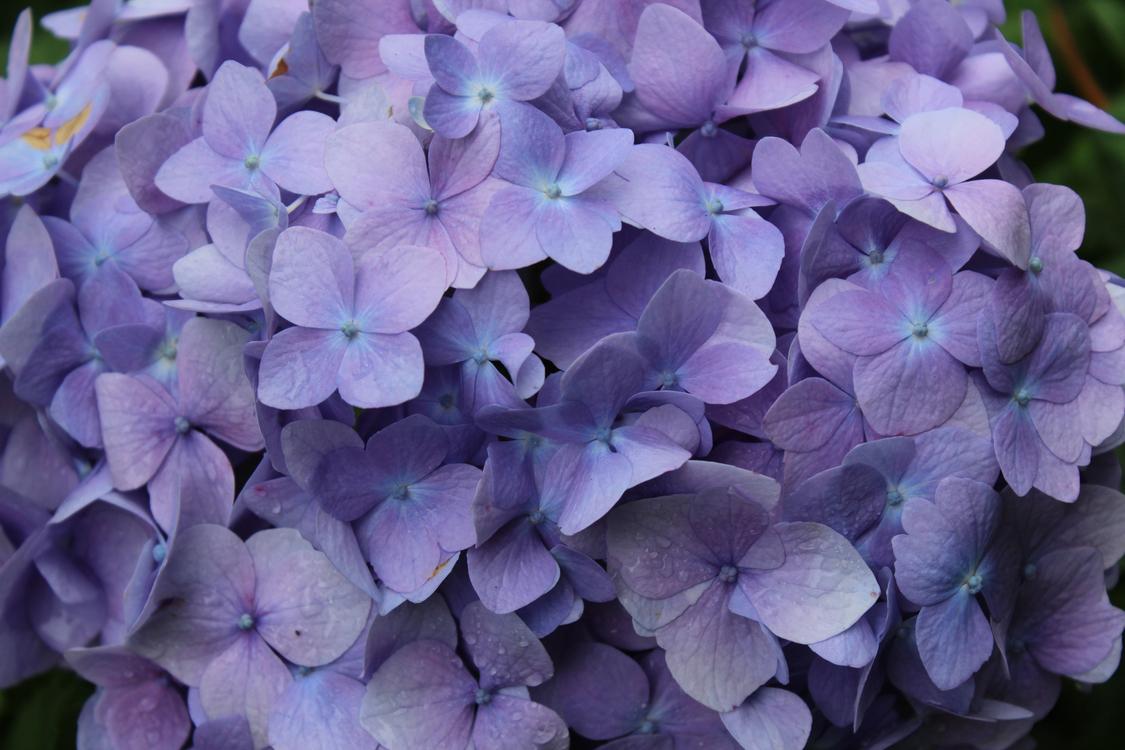 Flower Floral design Rain Wet season Purple