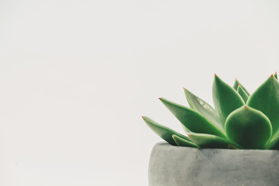 Computer Wallpaper,Plant,Close Up