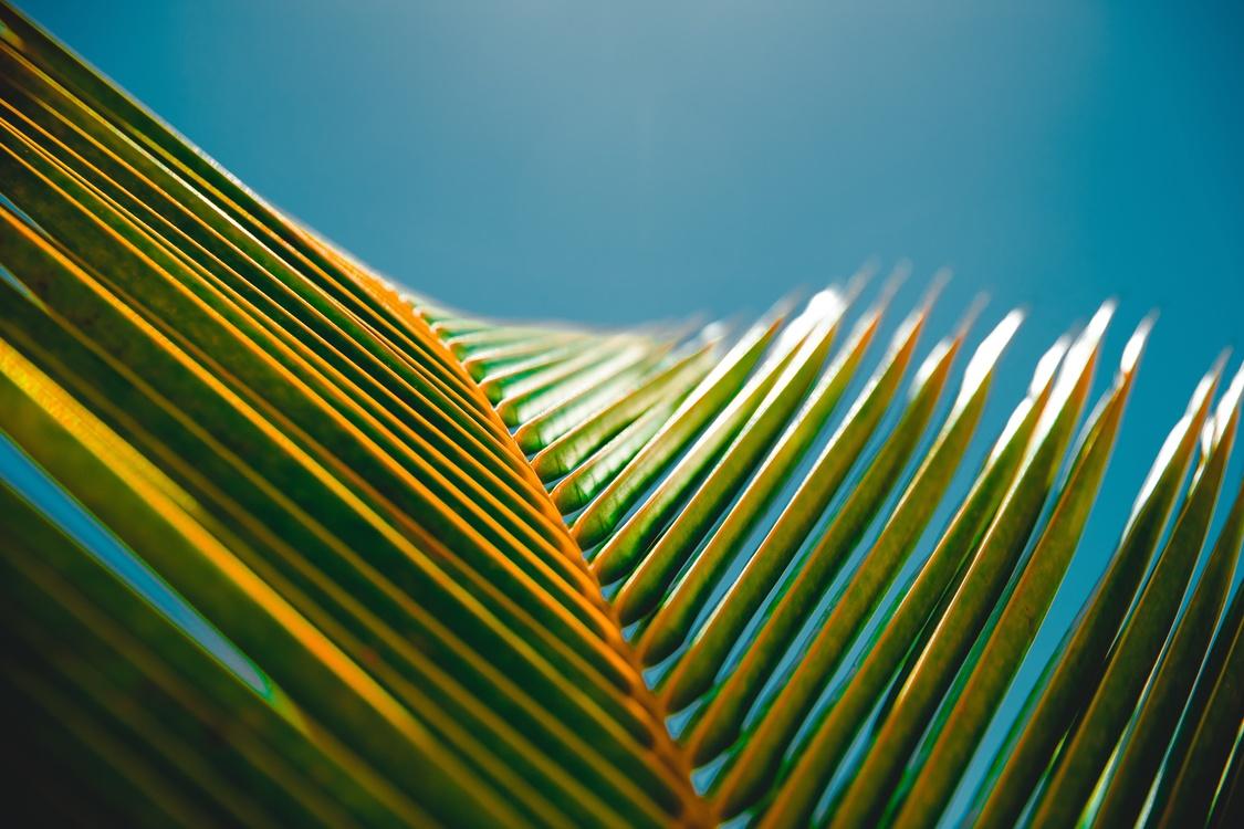 Grass Family,Close Up,Leaf