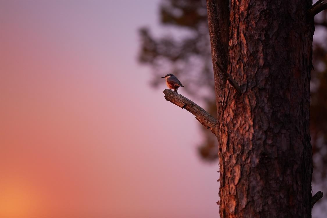 Wildlife,Macro Photography,Sky