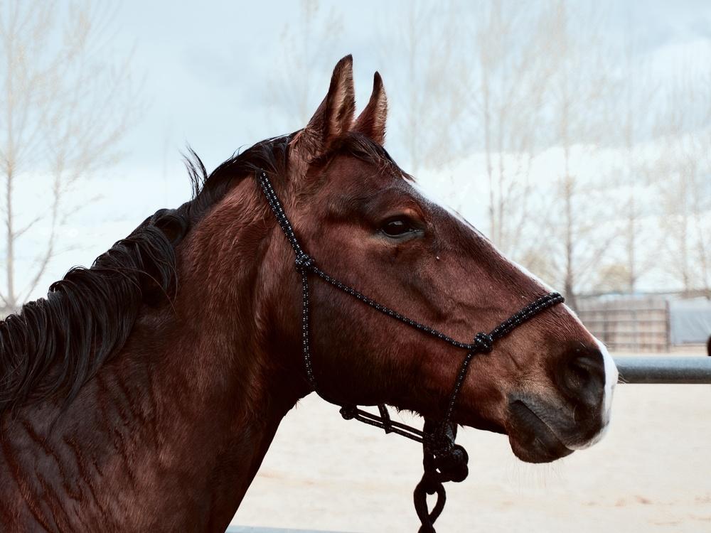 Mare,Horse,Hunt Seat