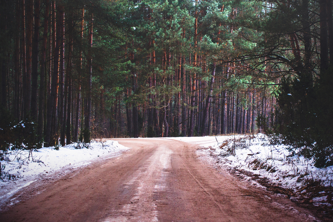 Temperate Coniferous Forest,Plant,Winter
