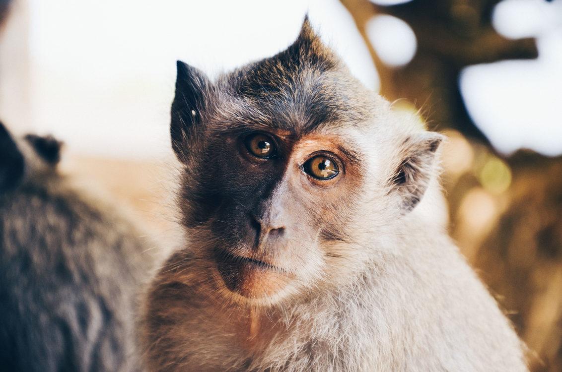 Wildlife,Close Up,Fur