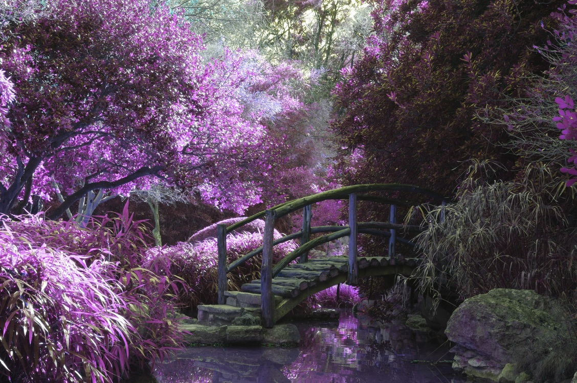 New York Botanical Garden Japanese Rock Garden Forest Gardening